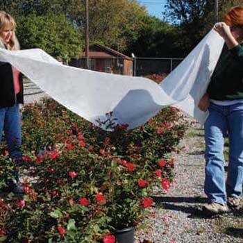 Winter Plant Protection Frost Cloth - Florida Landscaping Today