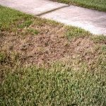 Florida Chinch Bug, Insect Control