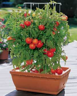Superb Container Vegetable Gardening
