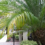Palm Tree Problems and Damage