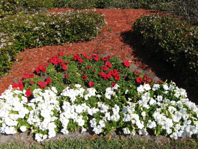 Bedding Plants Planting Guide