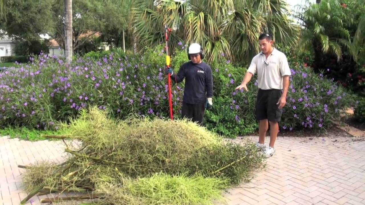 Florida Landscaping Today - Ideas, Guide, Plants, Lawn Care ...