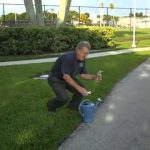 how to identify sod webworms in your Florida lawn