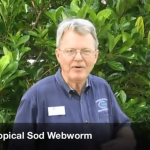 Identifing Sod Webworms in Your Florida Lawn
