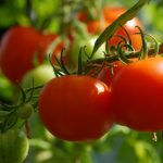 Tips For Planting A Vegetable Garden